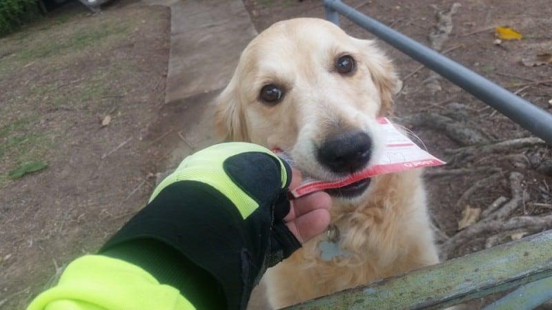 Эта-собака-обожает-забирать-письма