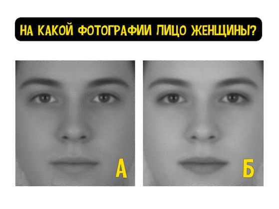 test-тест