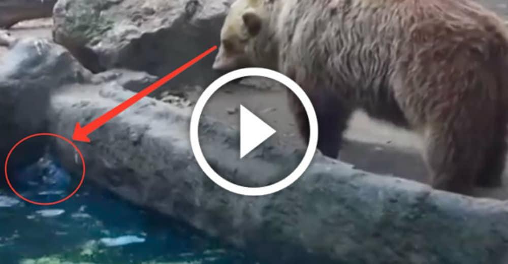 medved-spas-vorony