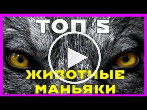 5-животных-маньяков-1